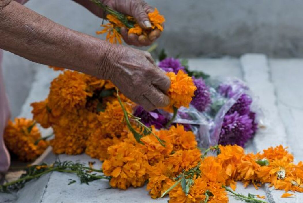 La tradición mexicana cuenta que esta flor alumbra el camino de las alma...