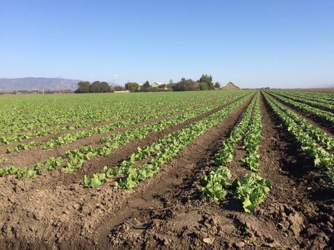 Salinas, California. Estos son los mismos campos que recorrió C&e...