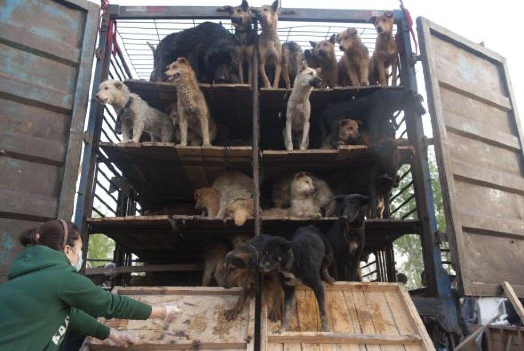 El diario 'Beijing Wangbao' informó que los perros fueron salvados tras...