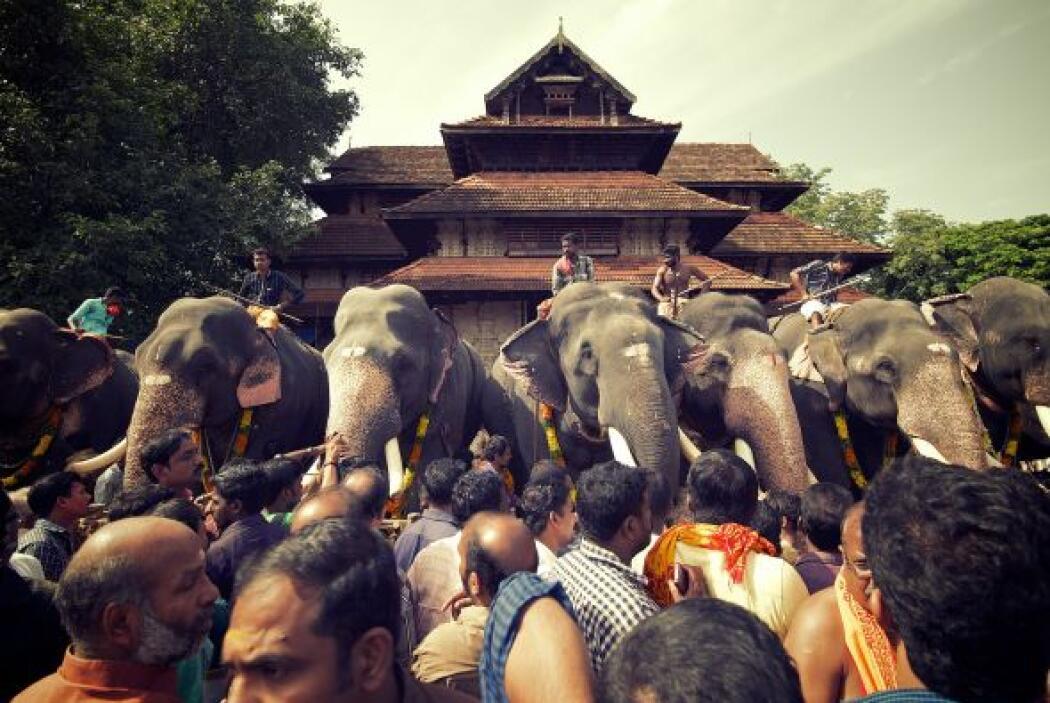 En la India es creído que el darle un gran banquete a los elefantes sati...