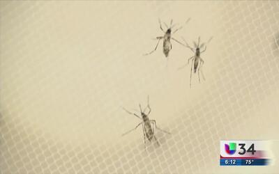 La presencia del virus del Zika en Georgia