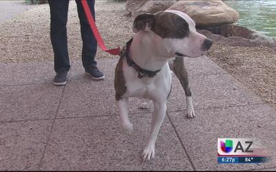 Alertan sobre un peligroso virus que afecta a las mascotas