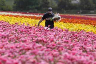 Autoridades de EU dijeron que durante San Valentín revisarán flores proc...