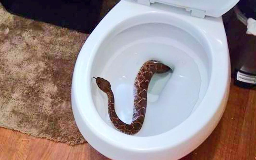 Familia De Texas Encuentra 24 Serpientes Cascabel En Su