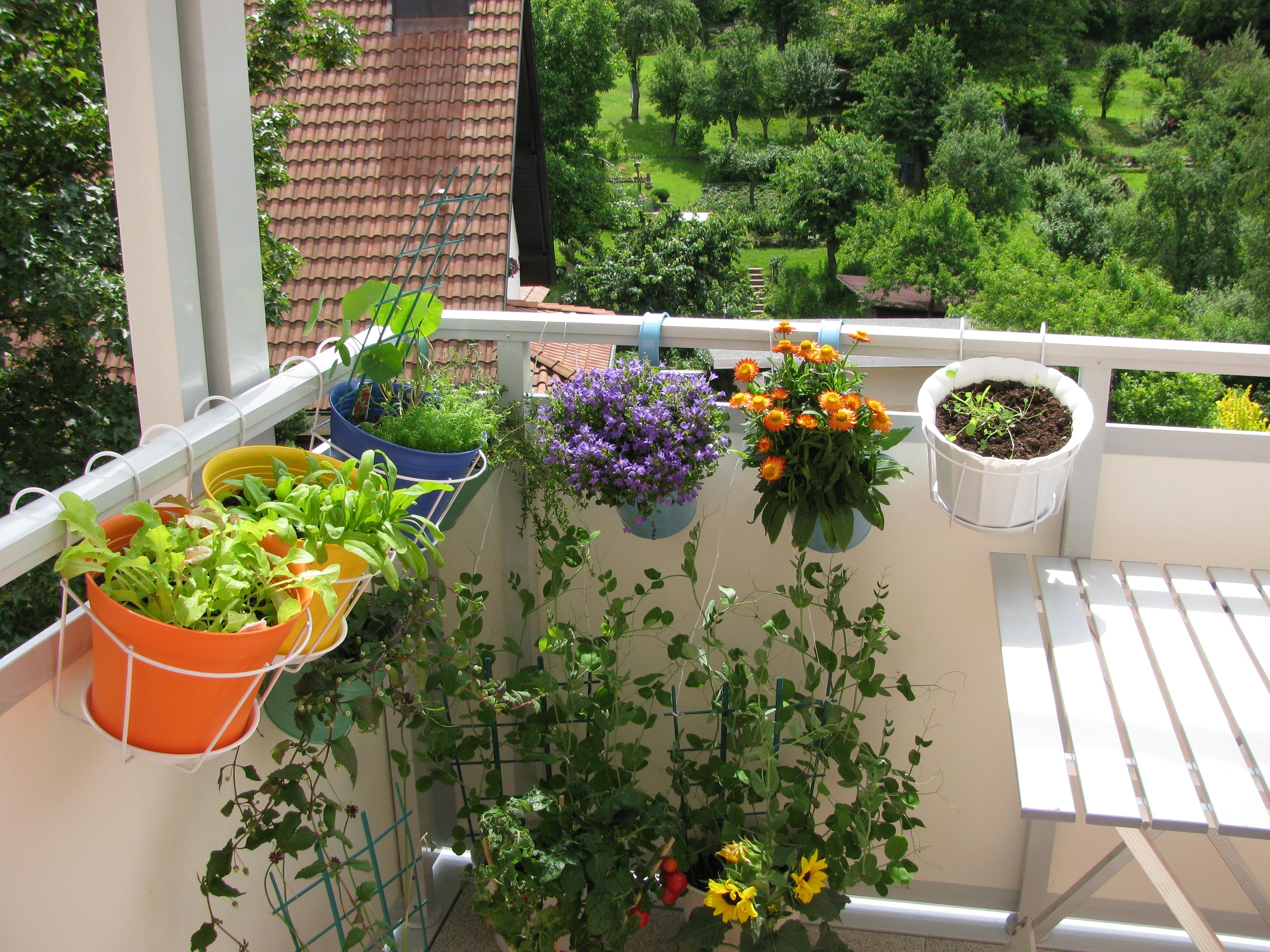 Plantas para tu balc n univision - Fensterbrett gestalten ...