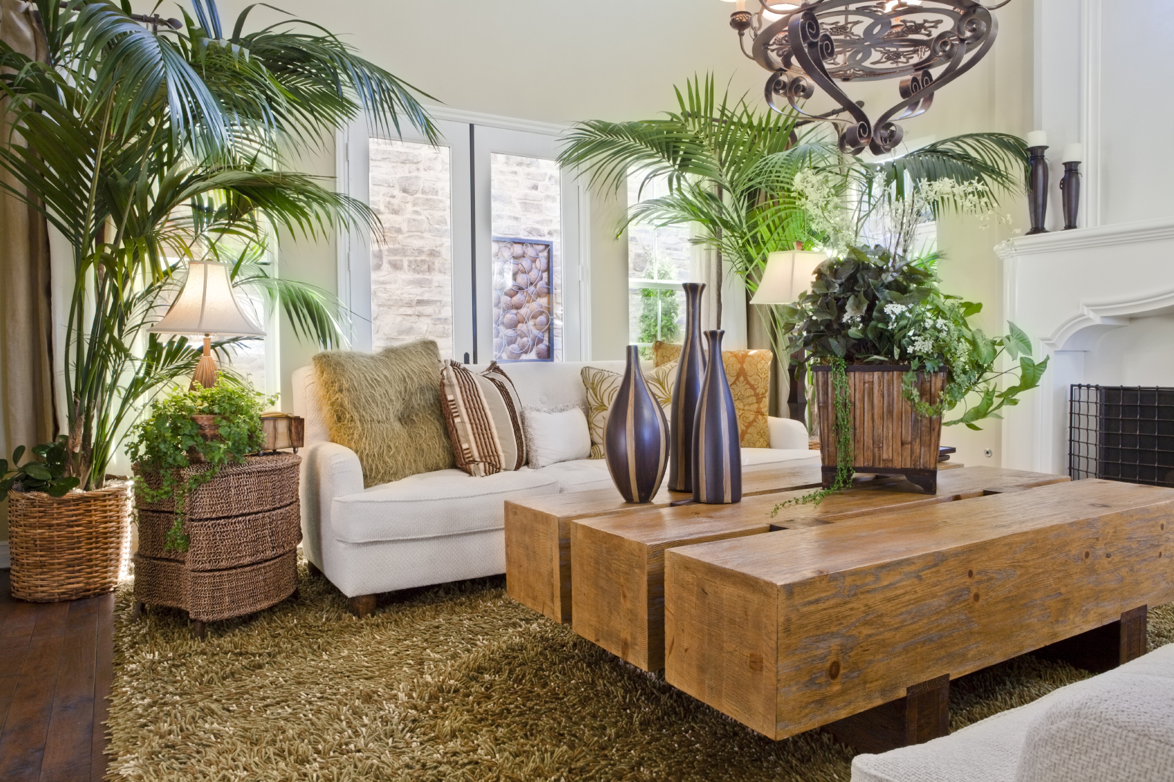 Decoraci n con plantas de interior univision for Decoracion con plantas en living
