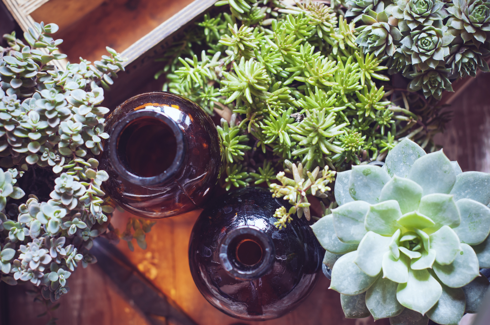 Plantas de poco riego para tu jard n univision for Aspersores para riego de jardin