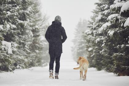 10 consejos para ayudar a los animales a resistir el frío istock-4995704...