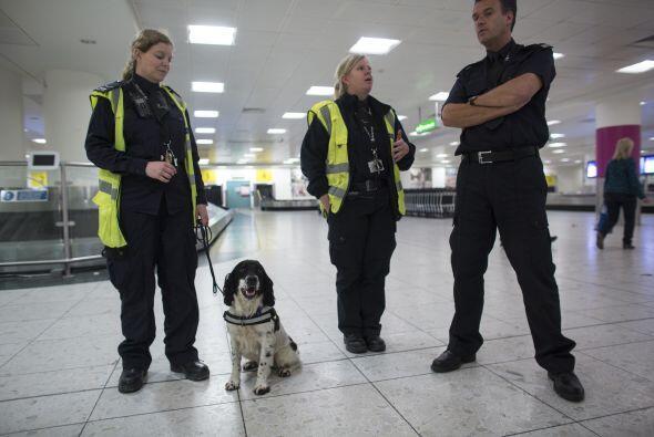 Los perros detectores son útiles en diferentes campos de seguridad, desd...