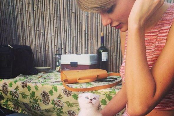 Tiempo después la gatita Olivia Benson llegó a hacerle compañía a Meredith.