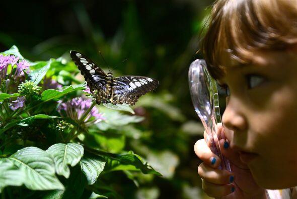 5. Washington: Es una ciudad en la que los niños curiosos y amant...