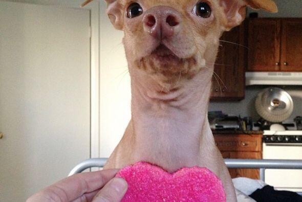 Tuna fue abandonado en los Ángeles pero su dueña lo rescató porque vio e...