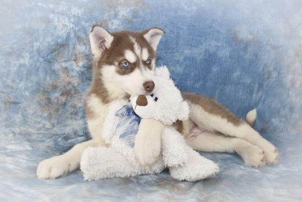 9. Ayúdale a canalizar sus instintos, por ejemplo un perro de caz...