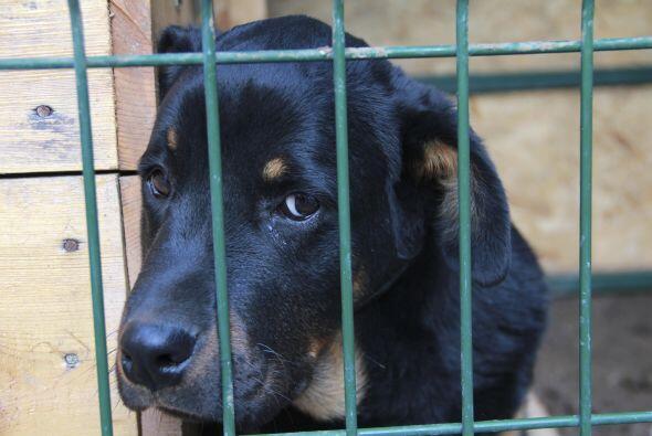 Por ejemplo, 90% de los cachorros que se venden en internet o en tiendas...
