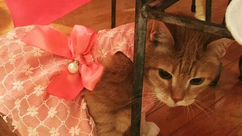 Cat gets own quinceanera