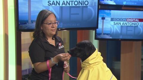 Las autoridades podrían multarte por no proteger a tus mascotas ante la...