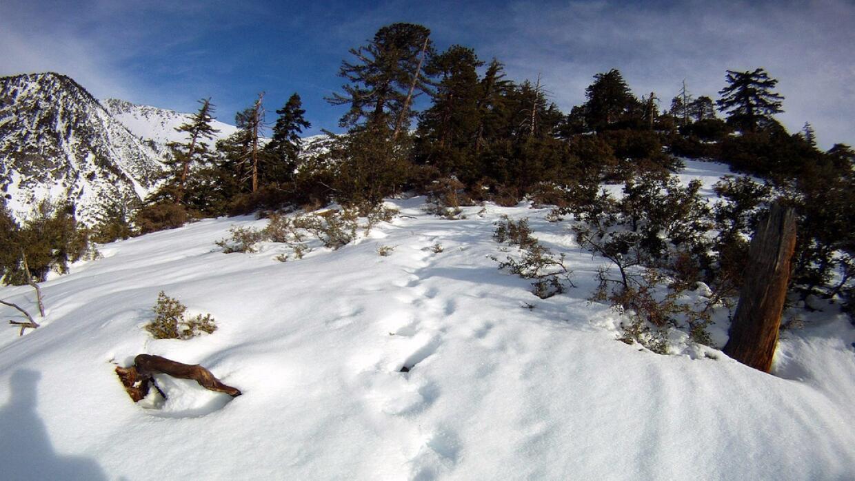 Sendero nevado en el monte Baldy, en California