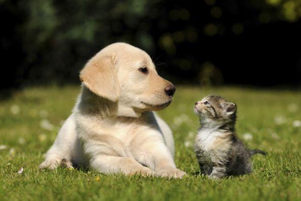 Por años se ha creado la rivalidad entre perros y gatos. Lo cierto es qu...