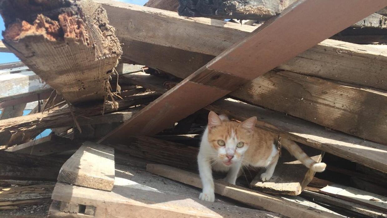 El gato de Mercedes también logró sobrevivir a los embates del huracán.