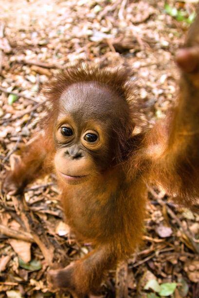La escuela de West Kalimantan en Borneo, Indonesia, ayuda a que estas cr...