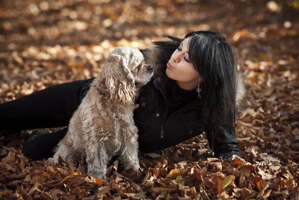 10.Cocker Spaniel Es uno de los mejores perros de compañía que hay, equ...