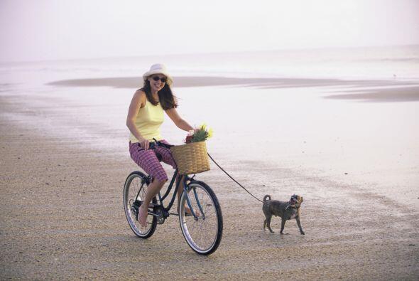 El bikejoring es otra disciplina que puedes practicar con tu perro,  a d...