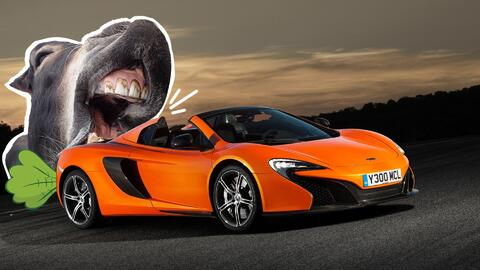 Jaws automotor: El incidente reveló lo irresistible que es una za...