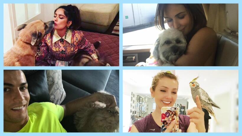 Los famosos que más aman a sus mascotas.
