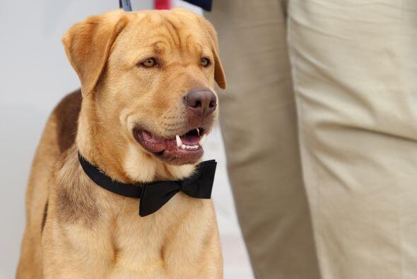 Los 200 perros que participaron consiguieron una familia que los quiera.