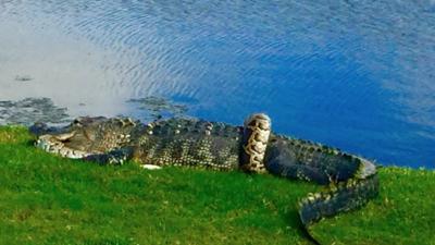 Un grupo de hombres que jugaban en el Golf Club de Fiddler's Creek, en N...