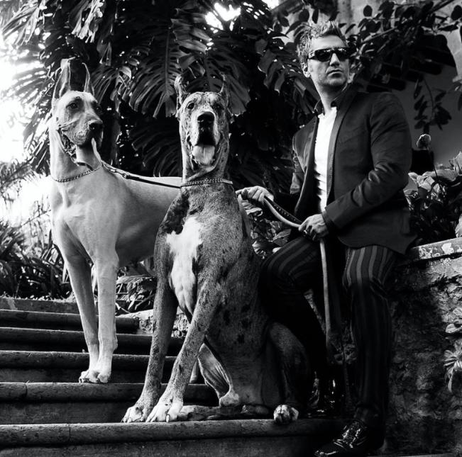 ¡También ama a los animales! Los perros suelen ser los protagonistas en...