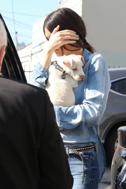 ¡Este perrito no sabe las aventuras que le esperan al lado de Kendall Je...