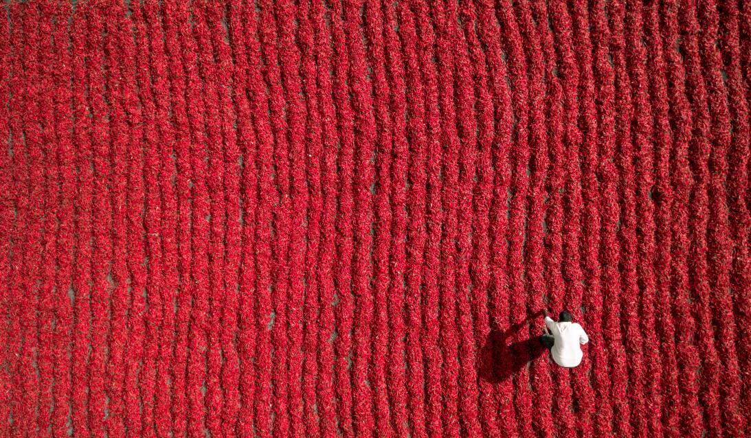 Red Chily Farmer by Aurobird.jpg