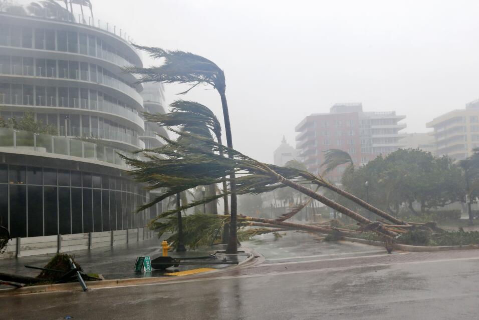 Las palmeras se doblan o caen por los arrasadores vientos mientras el hu...