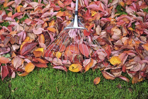 Recoge las hojas. No es la tarea más divertida del mundo pero pon...