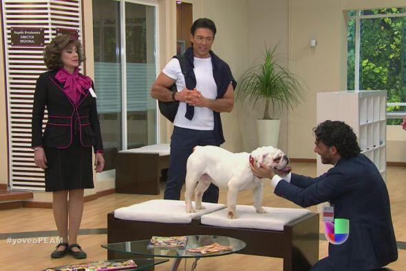 Este simpático perro era la adoración de su papá.