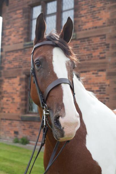 Ella encontró en su caballo la inspiración necesaria por superar una déc...