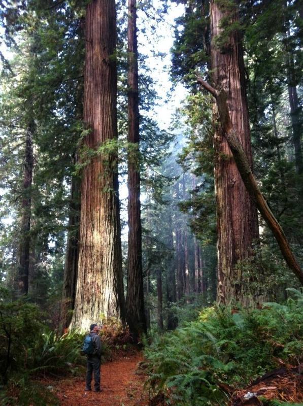 Vivir 2,000 años y otras 8 maravillas de los árboles más altos del mundo...
