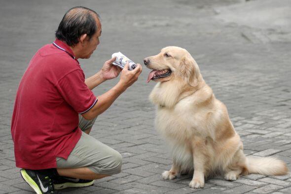 Su dueño, Handoko Njotokusuma, es muy feliz al compartir ambas pa...
