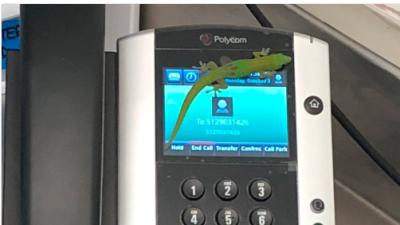 La lagartija que creó alarma tras llamar cientos de veces a los médicos de un centro de salud