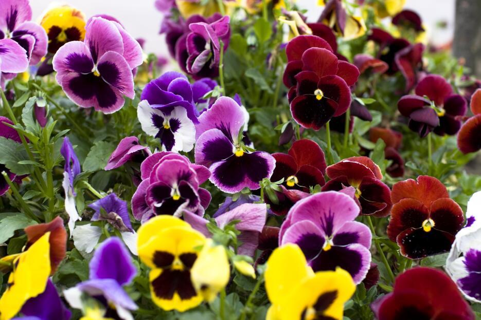 Las flores son protagonistas indiscutibles para llenar de primavera tu h...