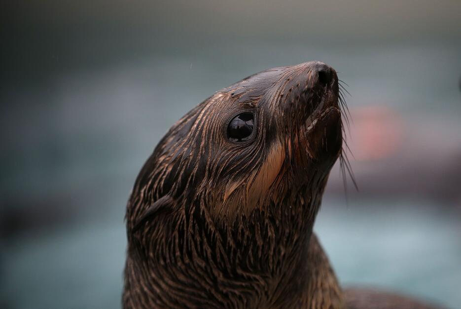 Los científicos creen que las aguas más cálidas están afectando a la dis...