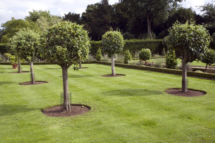 Rboles frutales para tu jard n univision for Arboles frutales para jardin