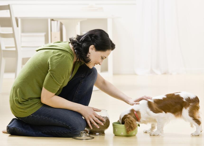 bebé y mascota
