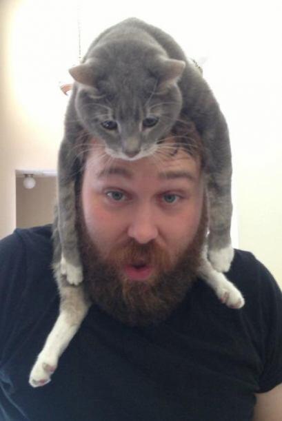 Al parecer estos gatitos disfrutan mucho estar sobre la cabeza de sus du...