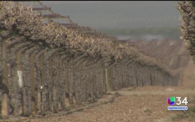 Un año más de sequía para California