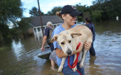 Un grupo de empleados del estado rescata a un perro, en medio de las inu...