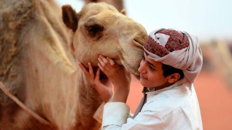 En el festival del camello se otorgan premios en unas 270 categor&iacute...
