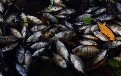 Contaminación en el río Lempa