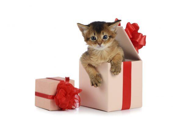 Una de las ventajas de pasar San Valentín con tu mascota, es que él no t...